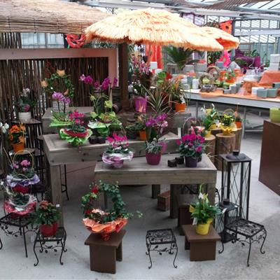 Deko-Blumenstöcke