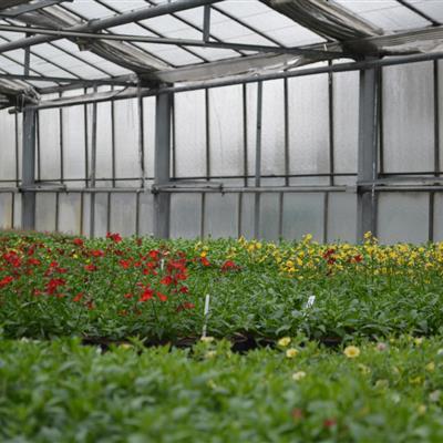 Gewächshaus Beet- und Balkonpflanzen