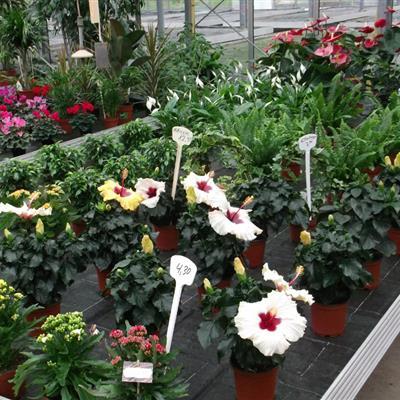 unterschiedliche Zimmerpflanzen